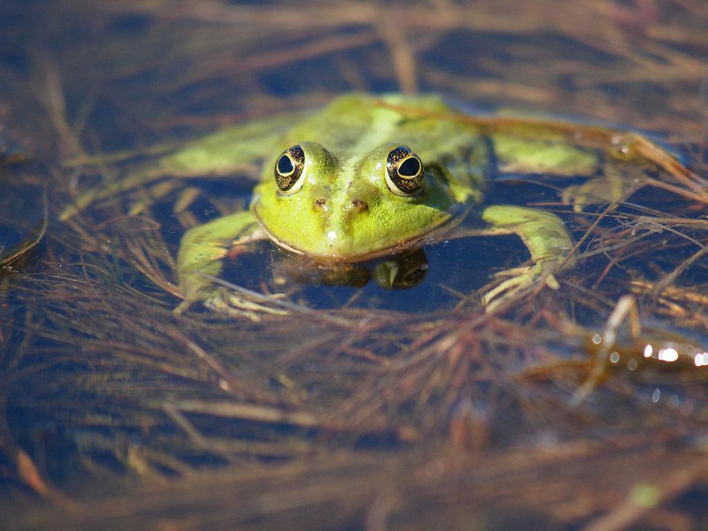 Delta Frog II