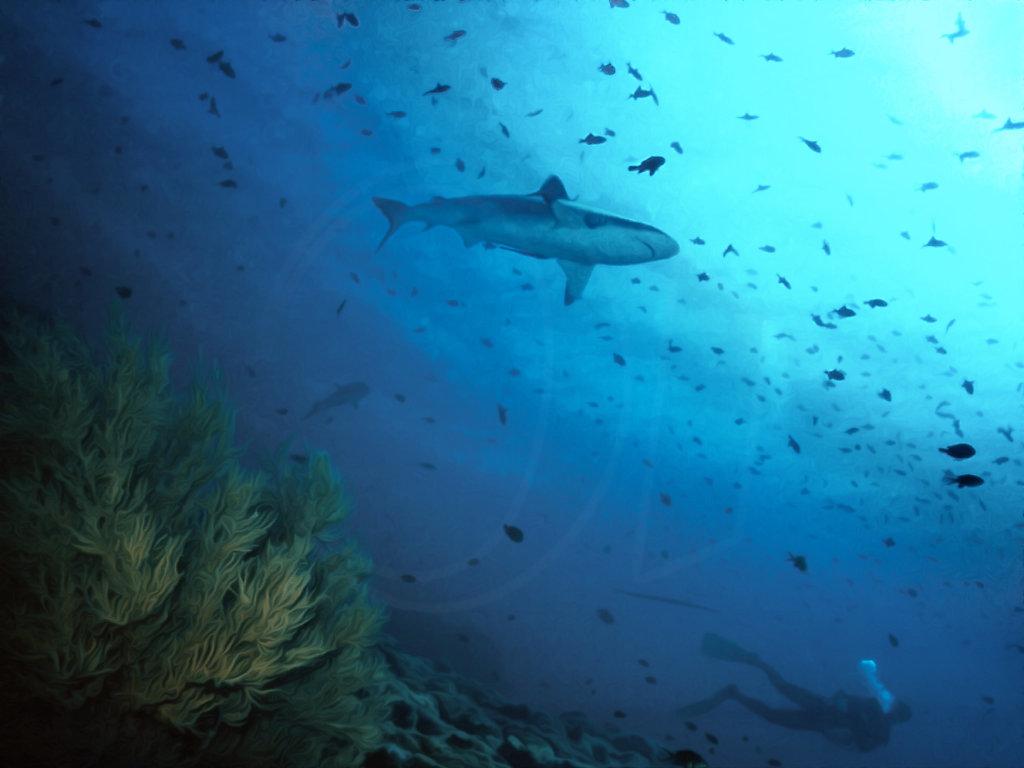 Maaya Tila Shark
