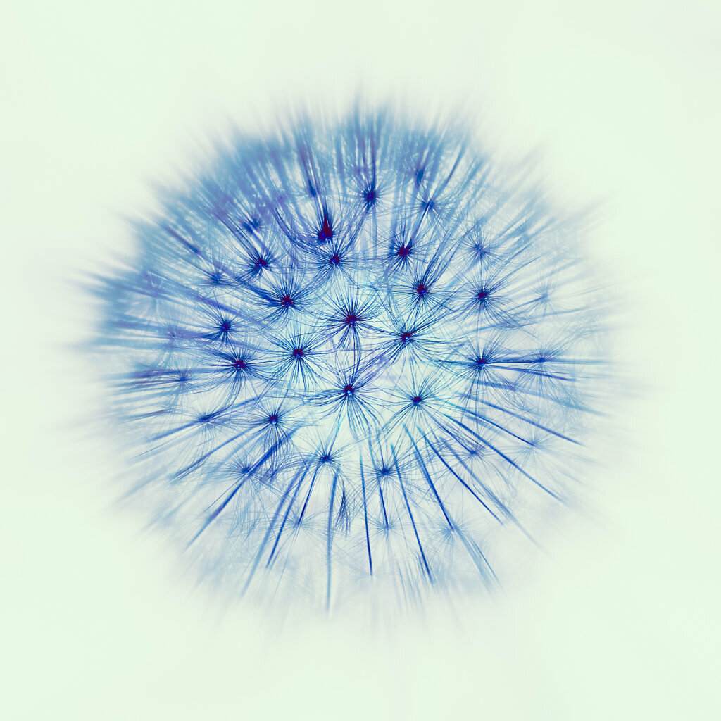 Inverted Bright Blueberry