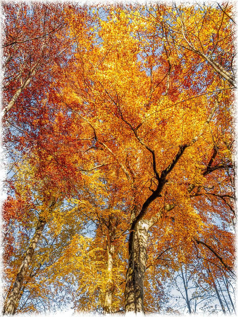 Autumn Colours I