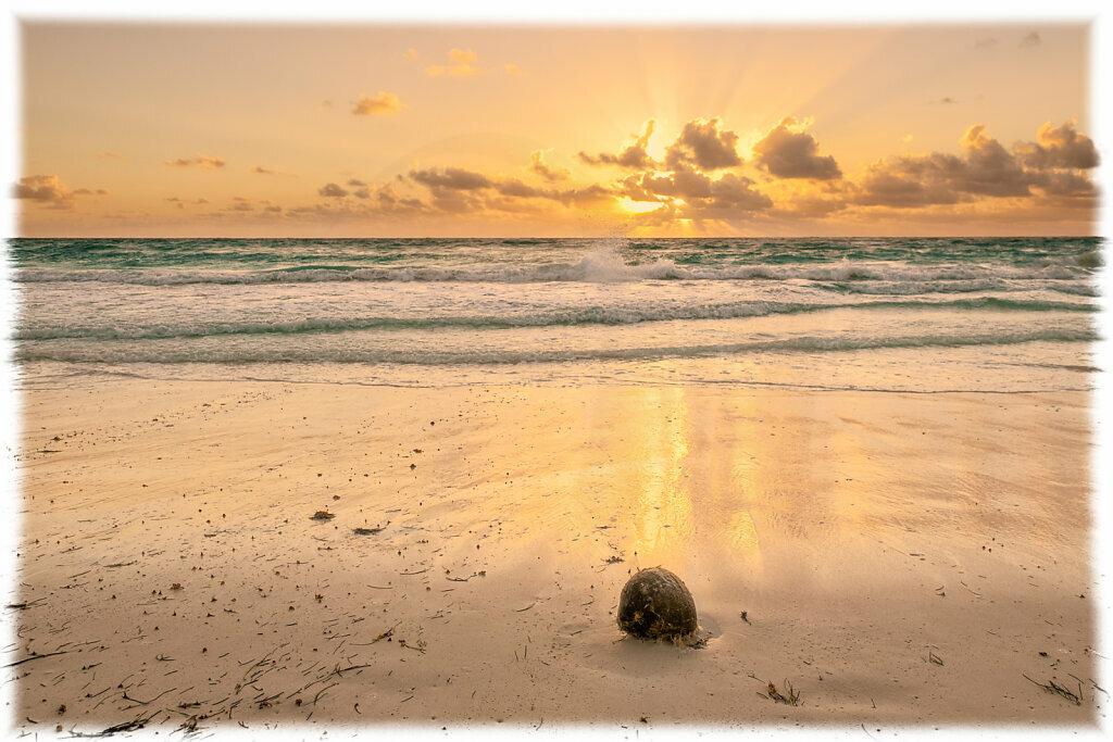 Cconut on the Beach