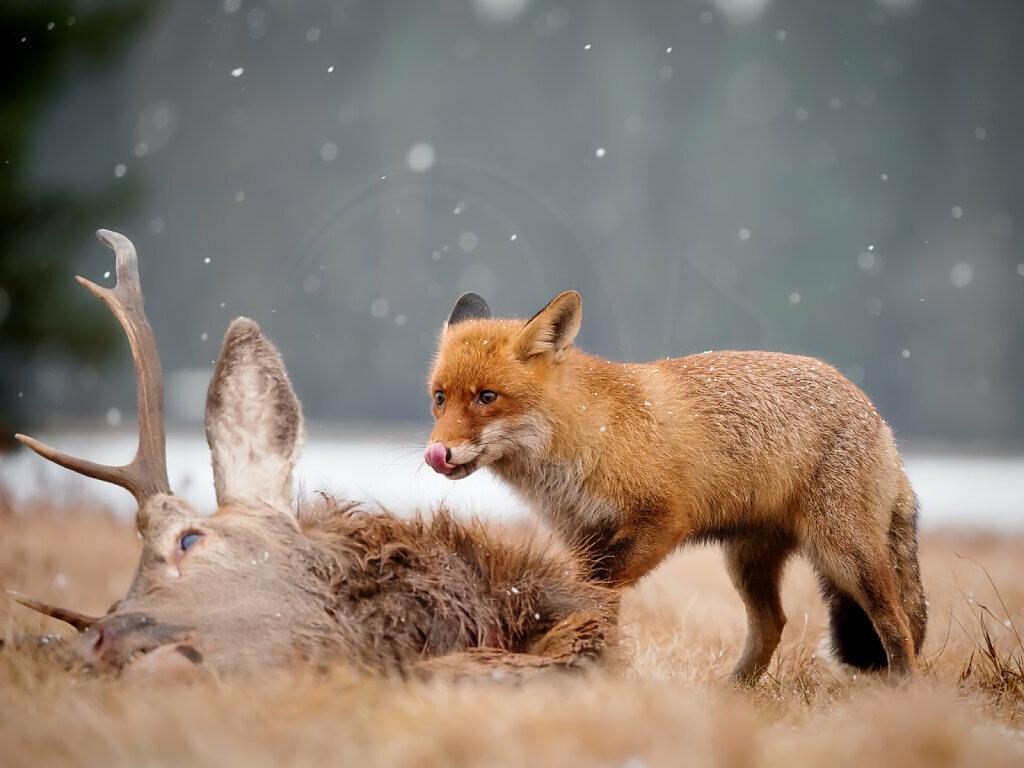 Yummy - Deer Gulash