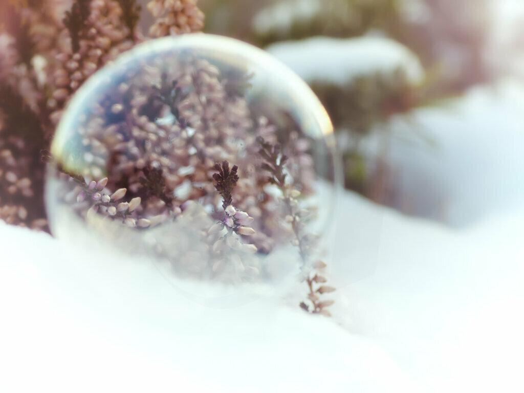 Winter Heath