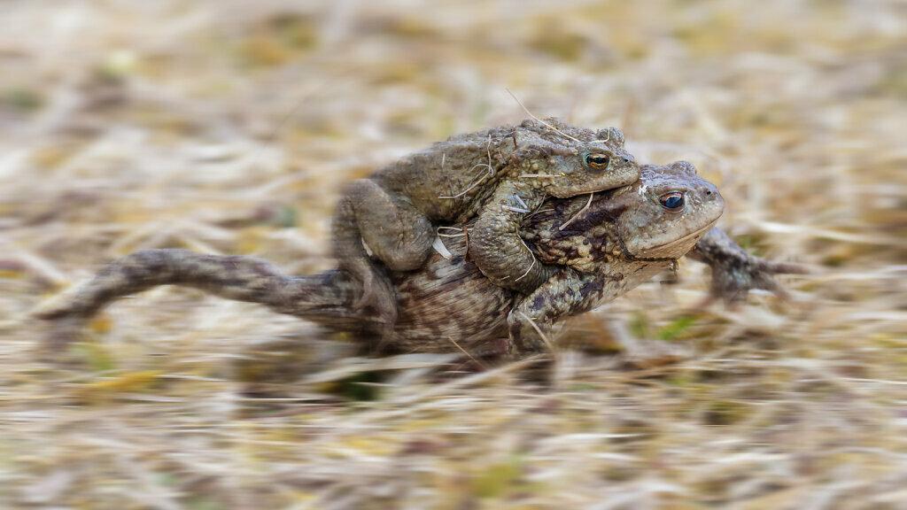 Toads III